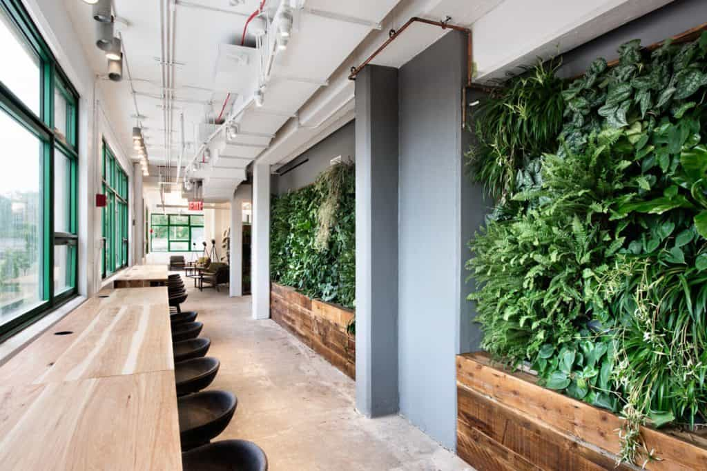 "A ""green wall"" in an office space"